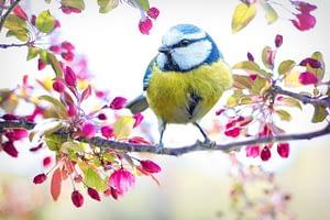 spring bird, bird, tit